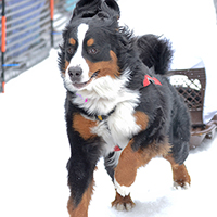 inline image dog runing in race for the humane society benefit event
