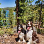 featured image showing two happy dogs hiking in the mountains overlooking Lake Tahoe