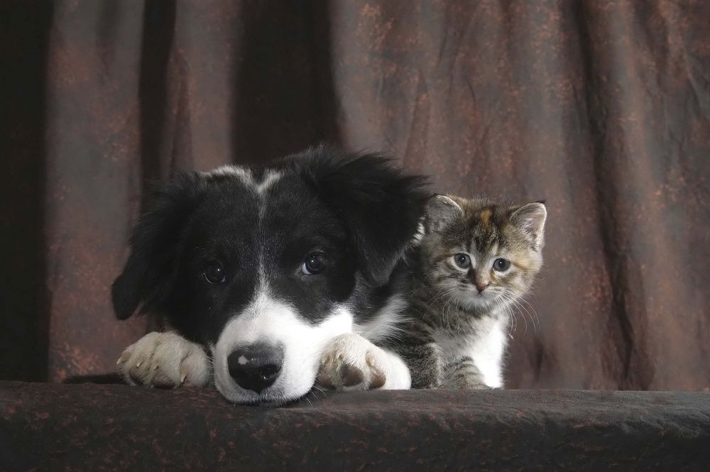 featured image showing a dog and kitten snuggled up and staring