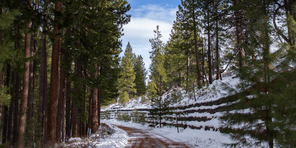 featured image showing a plowed trail in Truckee California